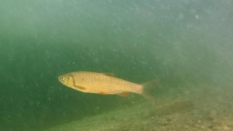 Bohinj - Riba pod vodo