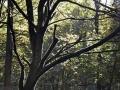 Bohinj - Drevo